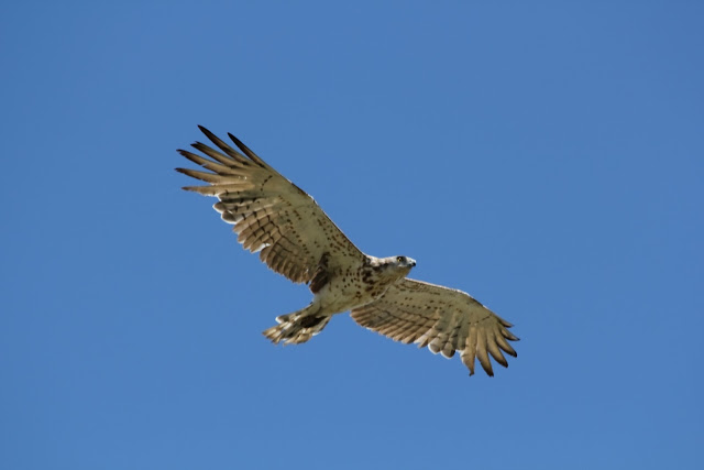 Vogels spotten Portugal bird watching